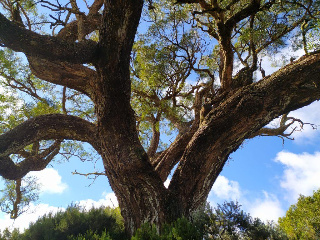 Concept tourisme durable, ile de la Réunion